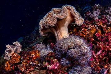 تنوع ژنتیکی در اسفنج های دریایی - آکادمی الماس